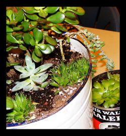 Succulent-garden-2